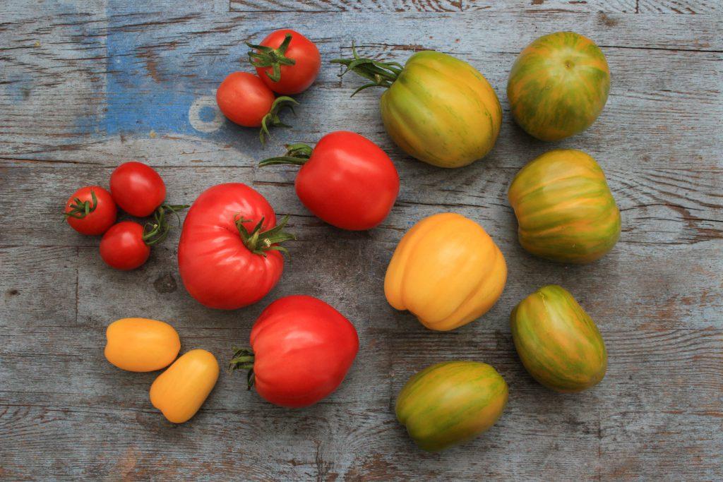 Tomatenvielfalt_Sorten