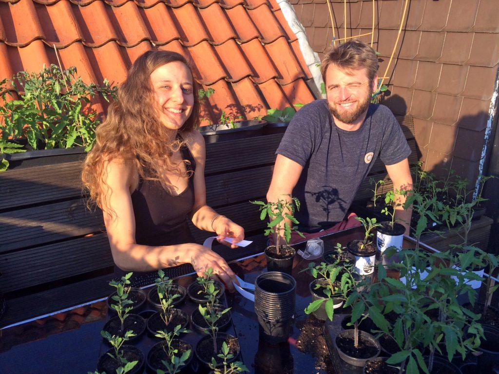 Tomatenpflanzen_Watertuun_Aquaponik