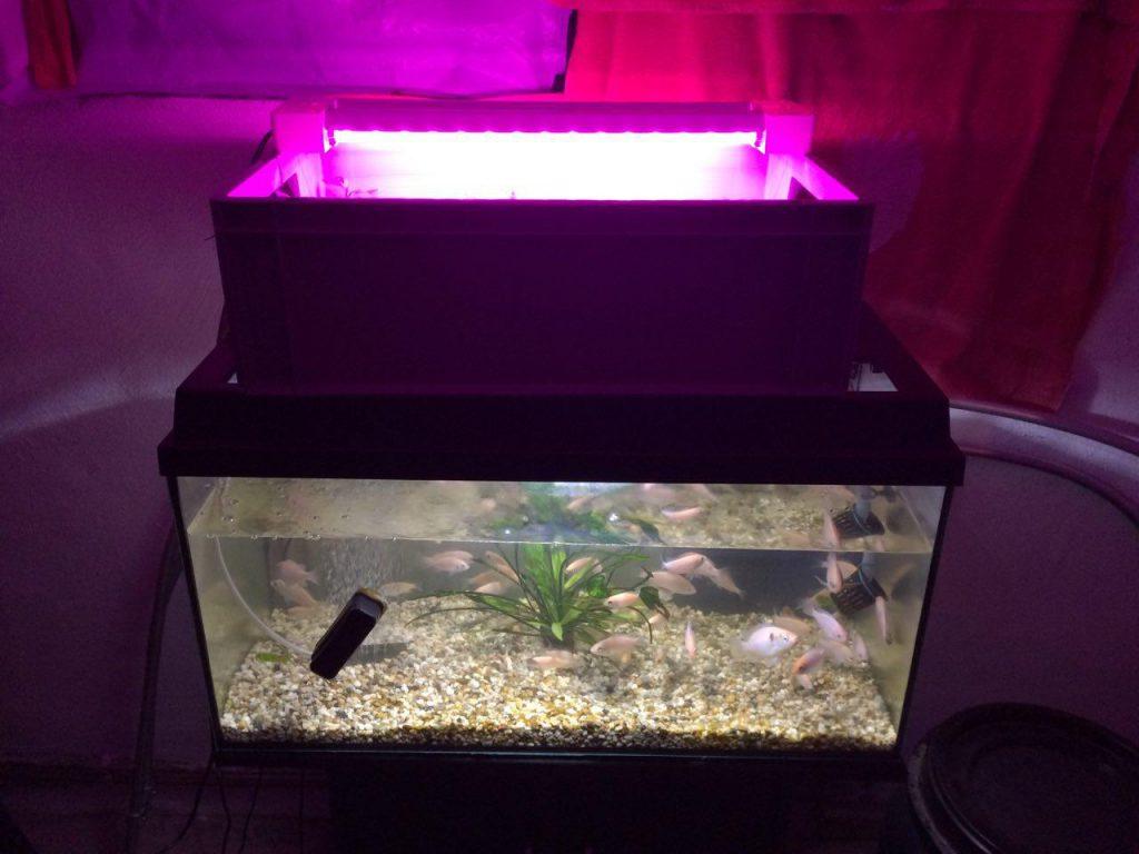 Aquarium_Aquaponik_Watertuun